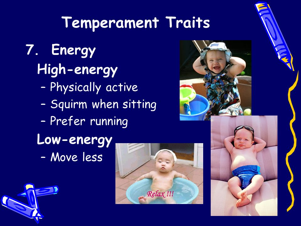 Temperament Traits 7. Energy High-energy –Physically active –Squirm when sitting –Prefer running Low-energy –Move less