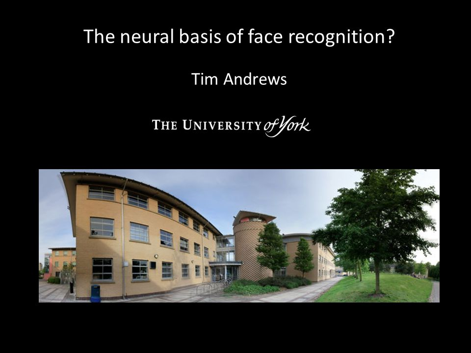 The neural basis of face recognition Tim Andrews