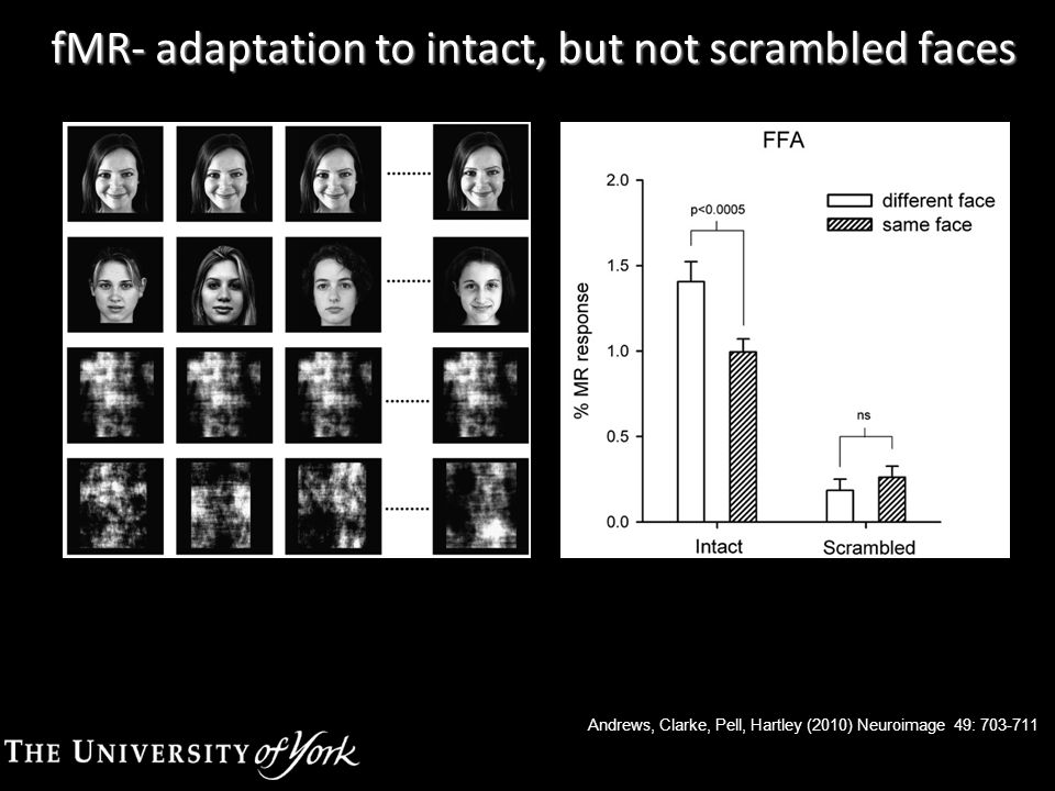 Andrews, Clarke, Pell, Hartley (2010) Neuroimage 49: 703-711 fMR- adaptation to intact, but not scrambled faces