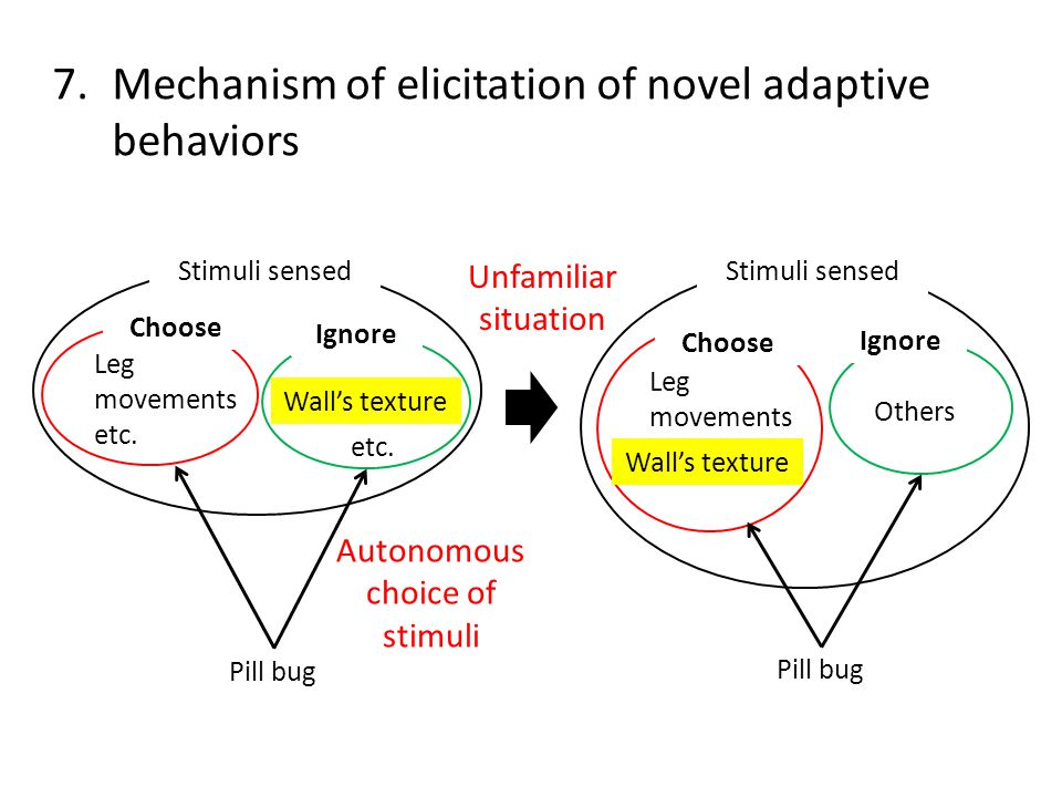7.Mechanism of elicitation of novel adaptive behaviors Leg movements etc.