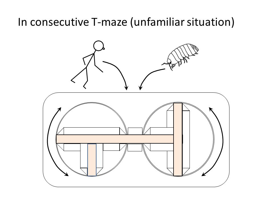 In consecutive T-maze (unfamiliar situation)