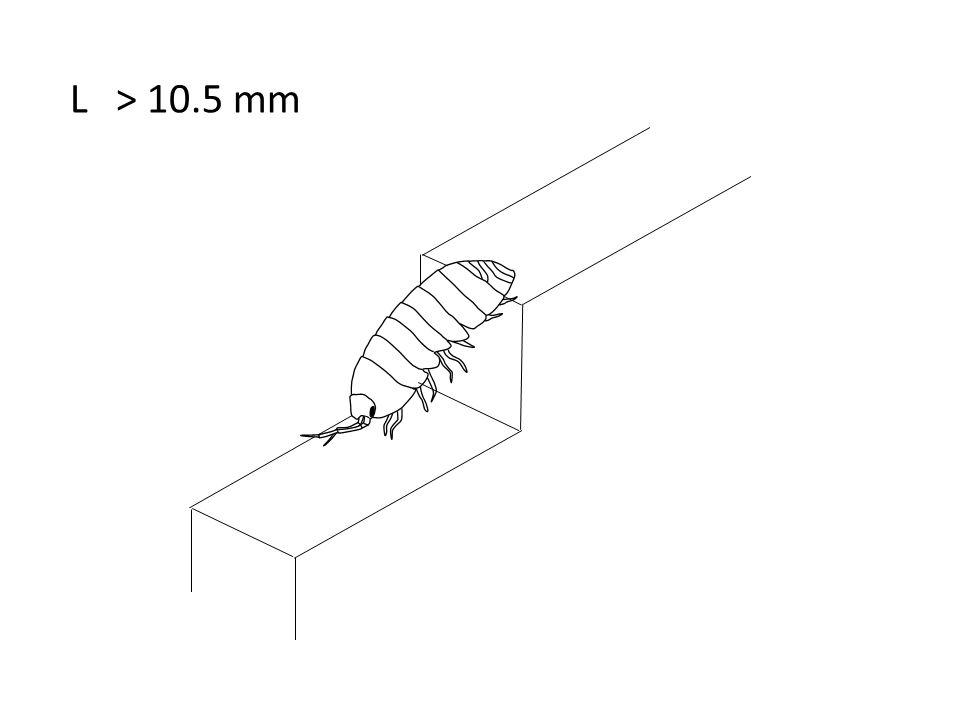 L > 10.5 mm