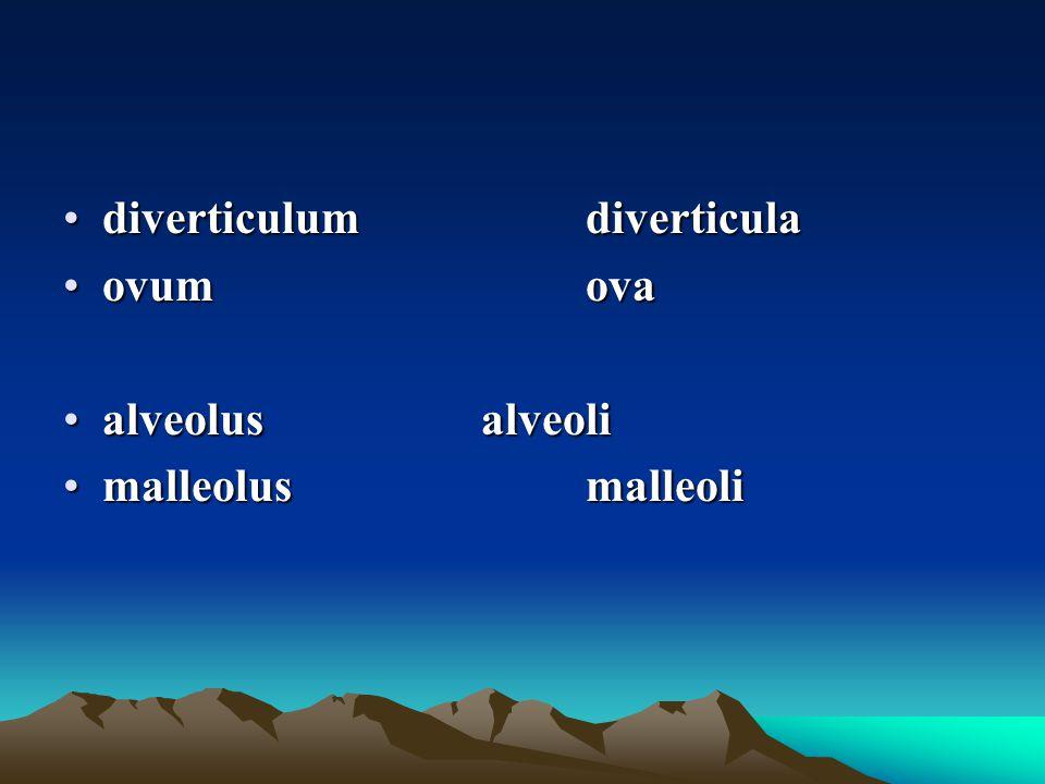 diverticulumdiverticuladiverticulumdiverticula ovumovaovumova alveolusalveolialveolusalveoli malleolusmalleolimalleolusmalleoli