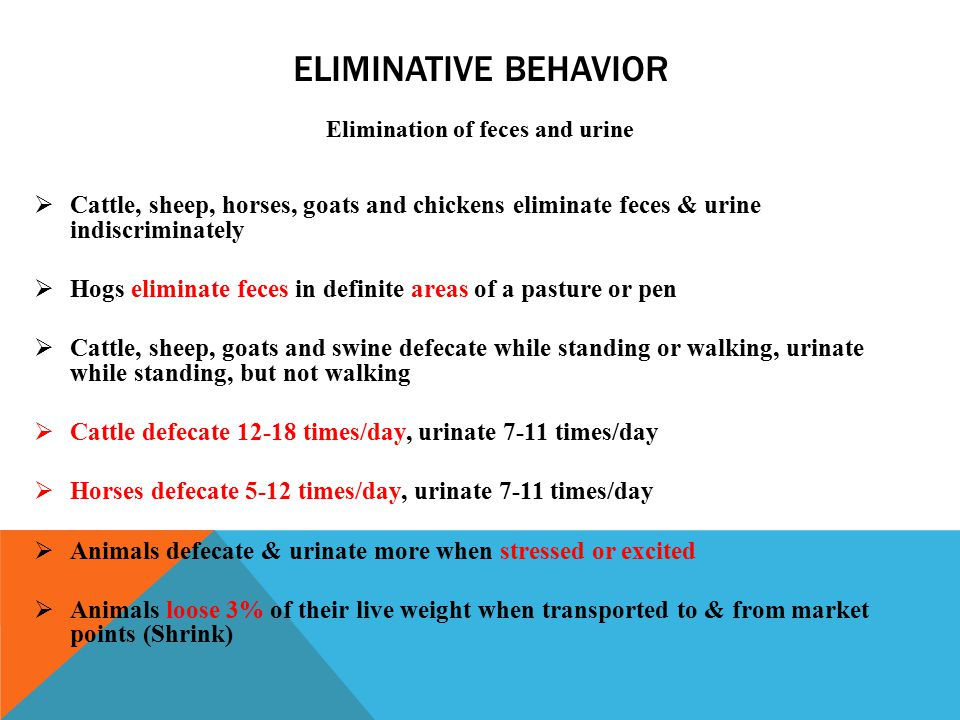 ELIMINATIVE BEHAVIOR Elimination of feces and urine  Cattle, sheep, horses, goats and chickens eliminate feces & urine indiscriminately  Hogs eliminate feces in definite areas of a pasture or pen  Cattle, sheep, goats and swine defecate while standing or walking, urinate while standing, but not walking  Cattle defecate 12-18 times/day, urinate 7-11 times/day  Horses defecate 5-12 times/day, urinate 7-11 times/day  Animals defecate & urinate more when stressed or excited  Animals loose 3% of their live weight when transported to & from market points (Shrink)