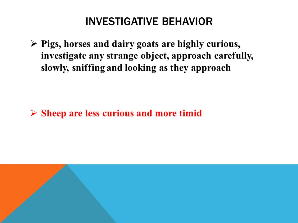 INVESTIGATIVE BEHAVIOR  Pigs, horses and dairy goats are highly curious, investigate any strange object, approach carefully, slowly, sniffing and looking as they approach  Sheep are less curious and more timid