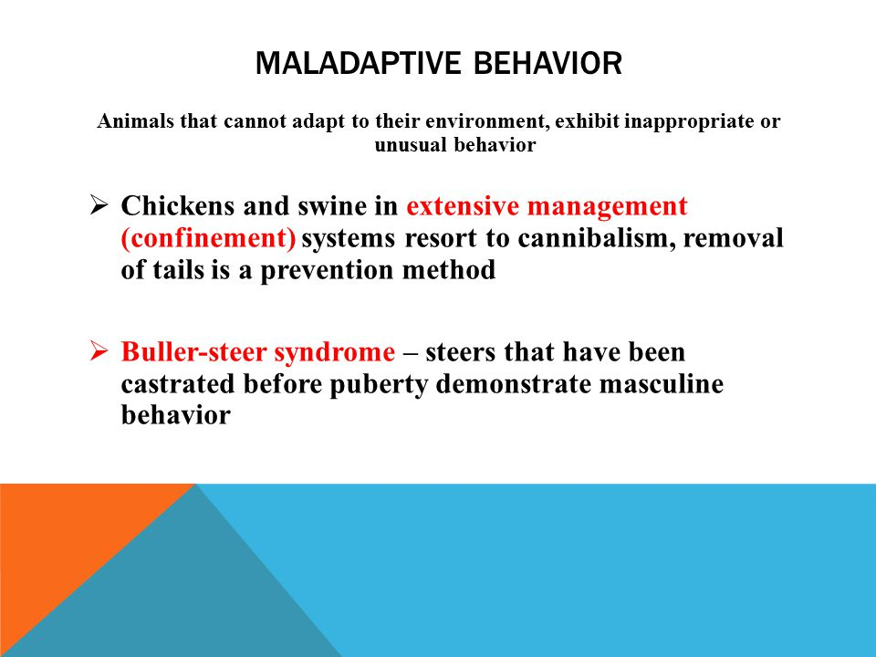 MALADAPTIVE BEHAVIOR Animals that cannot adapt to their environment, exhibit inappropriate or unusual behavior  Chickens and swine in extensive management (confinement) systems resort to cannibalism, removal of tails is a prevention method  Buller-steer syndrome – steers that have been castrated before puberty demonstrate masculine behavior