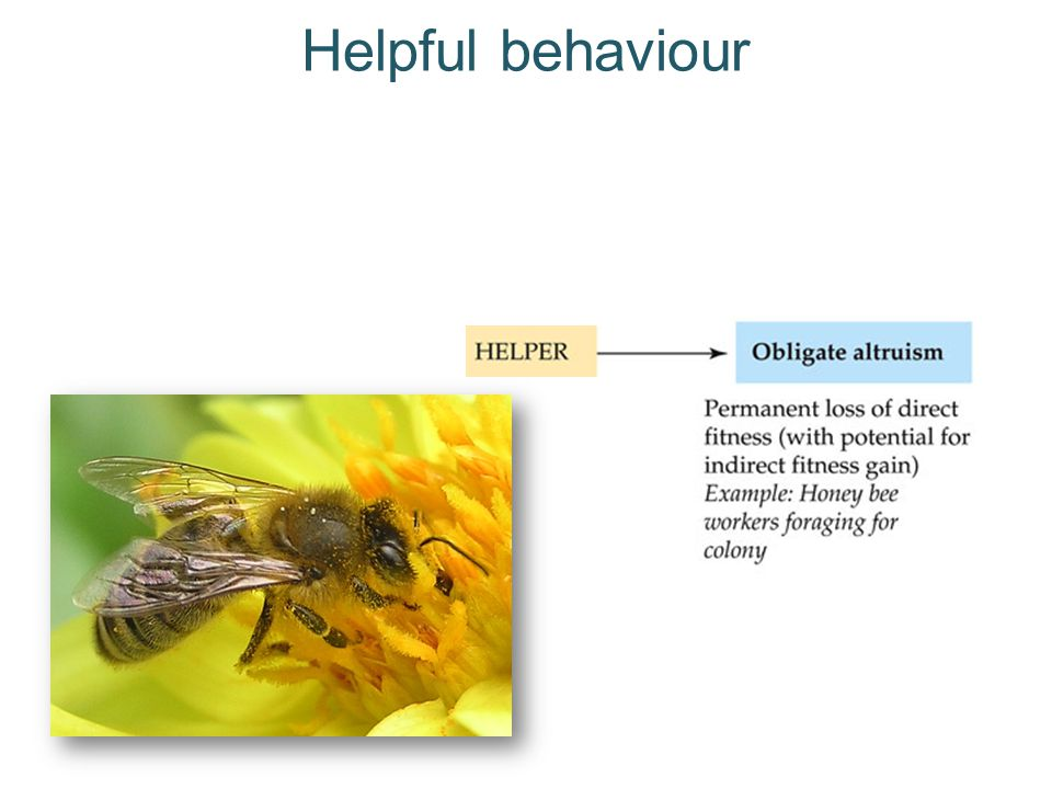 The puzzle of altruism Natural selection causes a particular behaviour to increase in a population if its fitness benefits outweigh its costs Then why do members of some species help other members without any obvious fitness benefits.