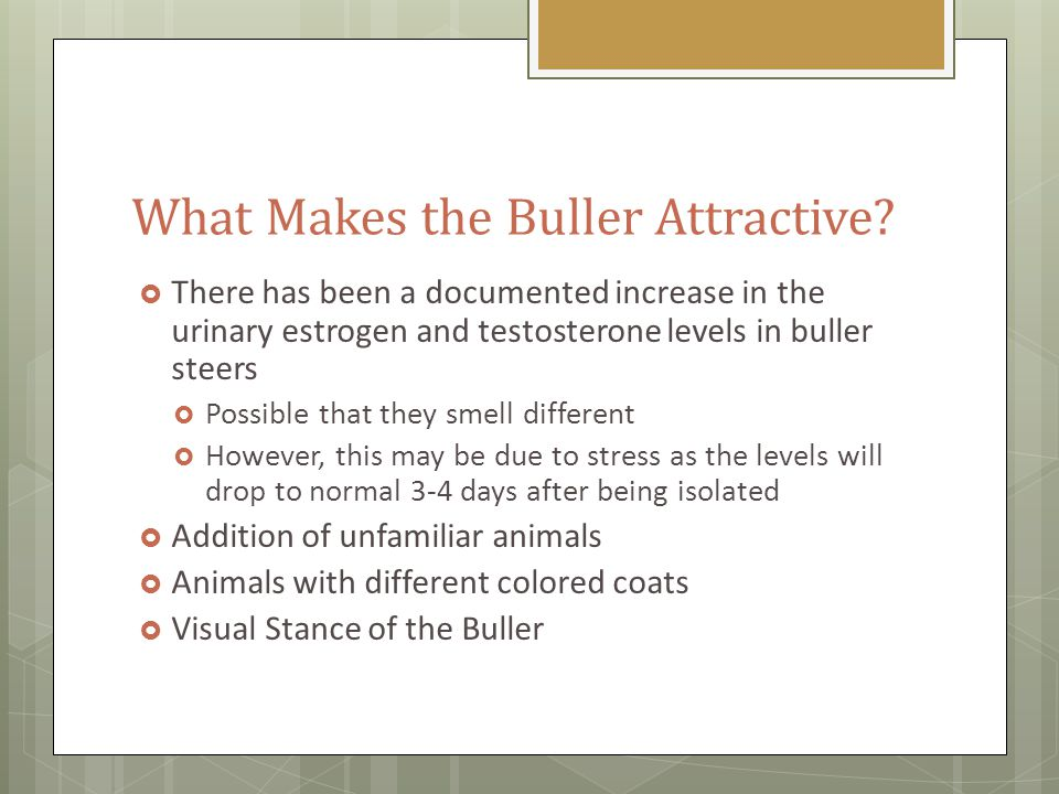 What Makes the Buller Attractive.