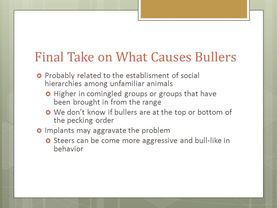 Final Take on What Causes Bullers  Probably related to the establisment of social hierarchies among unfamiliar animals  Higher in comingled groups or groups that have been brought in from the range  We don't know if bullers are at the top or bottom of the pecking order  Implants may aggravate the problem  Steers can be come more aggressive and bull-like in behavior