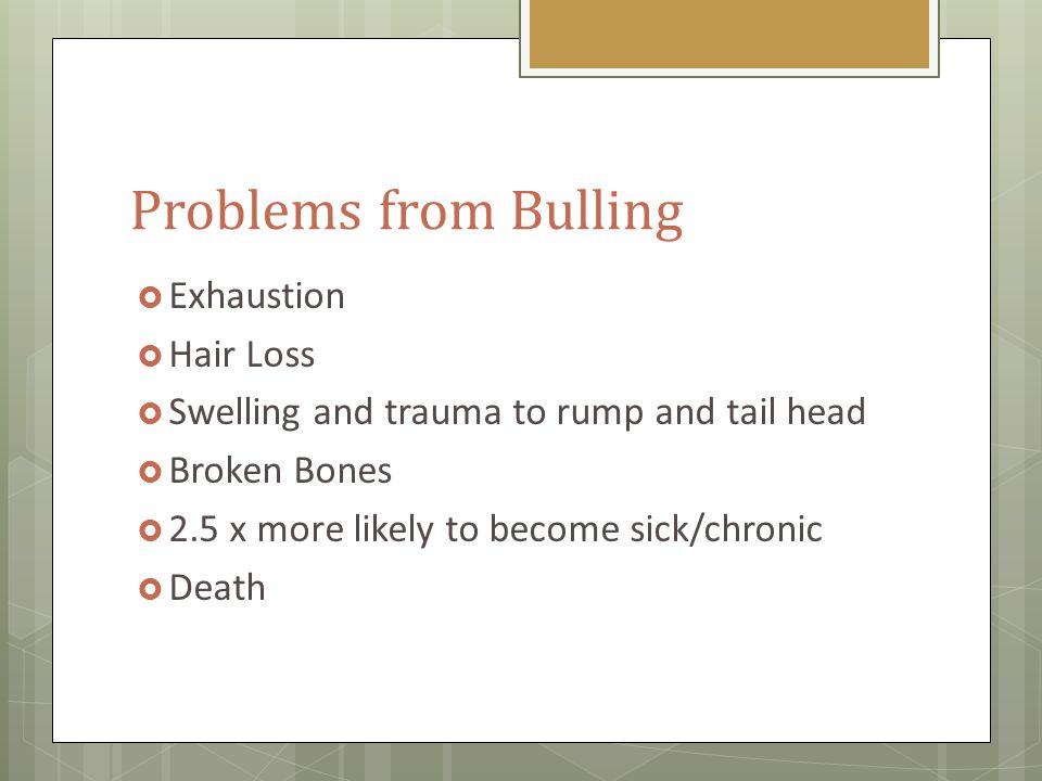 How Do We Treat Bullers.