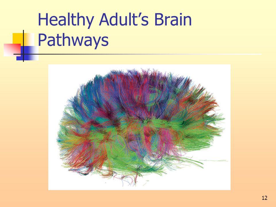 Healthy Adult's Brain Pathways 12