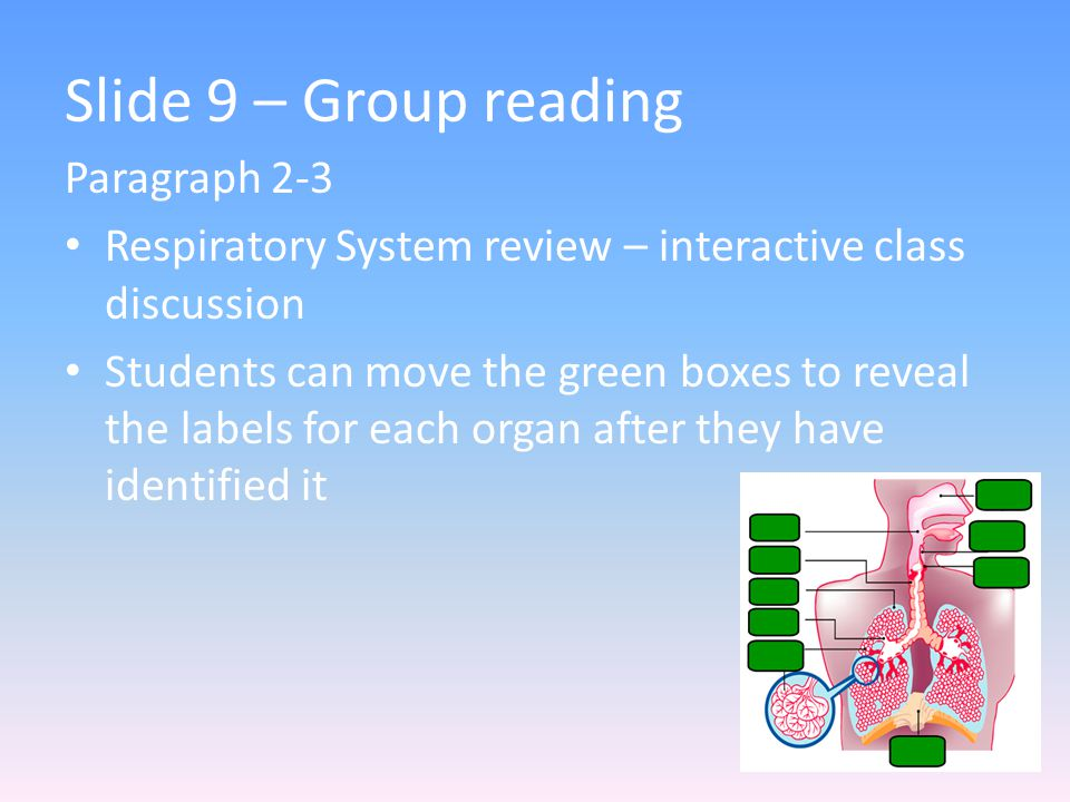 Slide 9 – Group reading Paragraph 2-3 Respiratory System review – interactive class discussion Students can move the green boxes to reveal the labels for each organ after they have identified it
