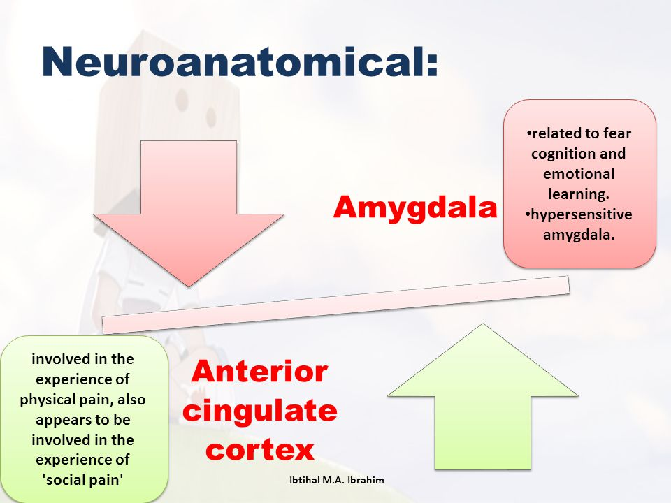 Neuroanatomical: Amygdala Anterior cingulate cortex involved in the experience of physical pain, also appears to be involved in the experience of 'soc