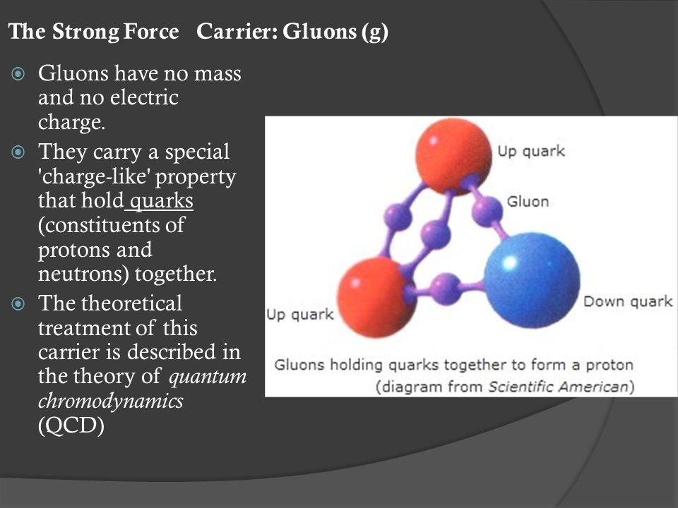 The Strong Force Carrier: Gluons (g)  Gluons have no mass and no electric charge.