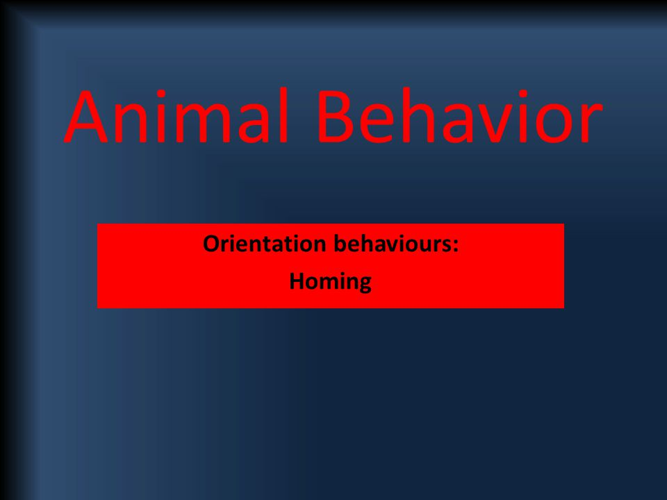 Animal Behavior Orientation behaviours: Homing
