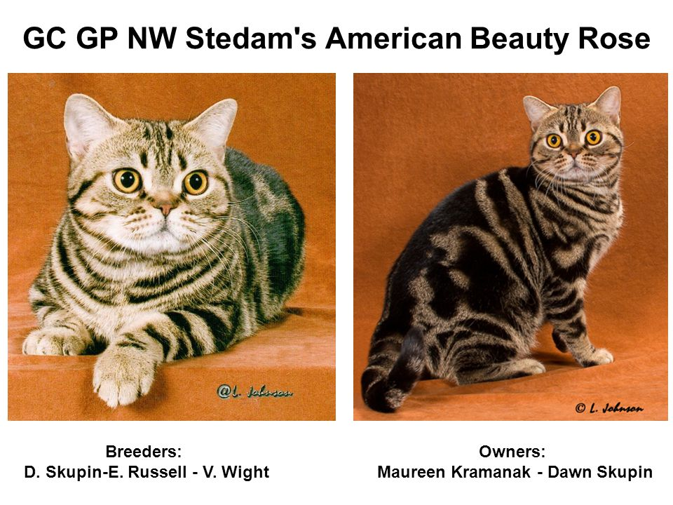 GC GP NW Stedam s American Beauty Rose Owners: Maureen Kramanak - Dawn Skupin Breeders: D.
