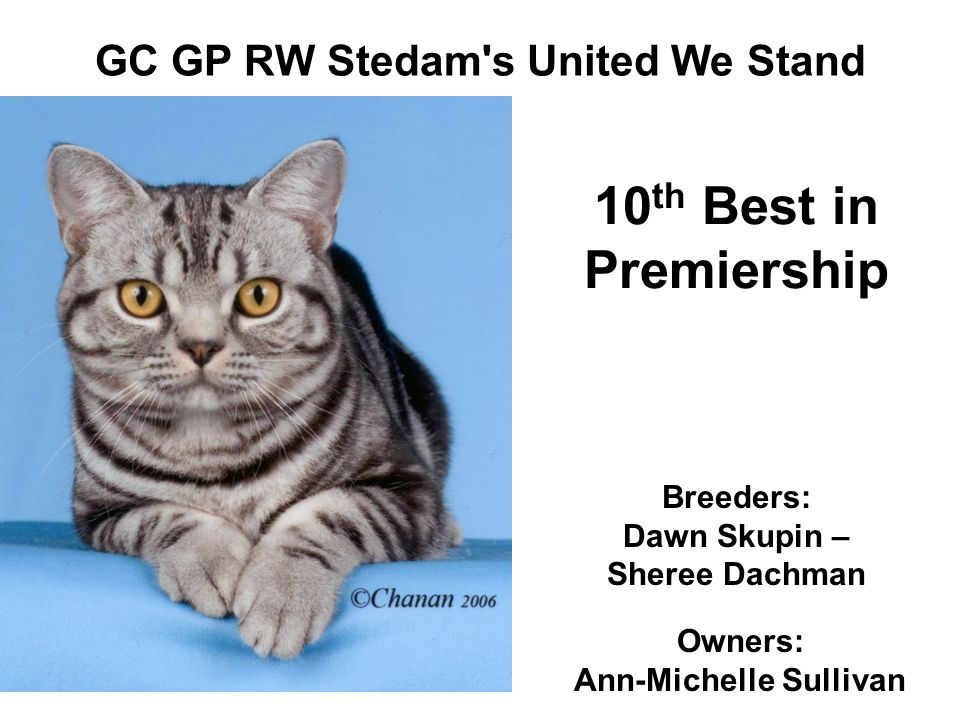 GC GP RW Stedam s United We Stand Breeders: Dawn Skupin – Sheree Dachman Owners: Ann-Michelle Sullivan 10 th Best in Premiership