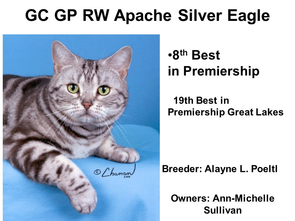 GC GP RW Apache Silver Eagle Breeder: Alayne L.