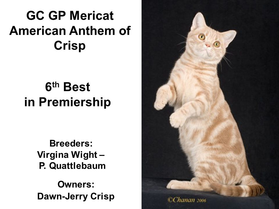 GC GP Mericat American Anthem of Crisp Breeders: Virgina Wight – P.