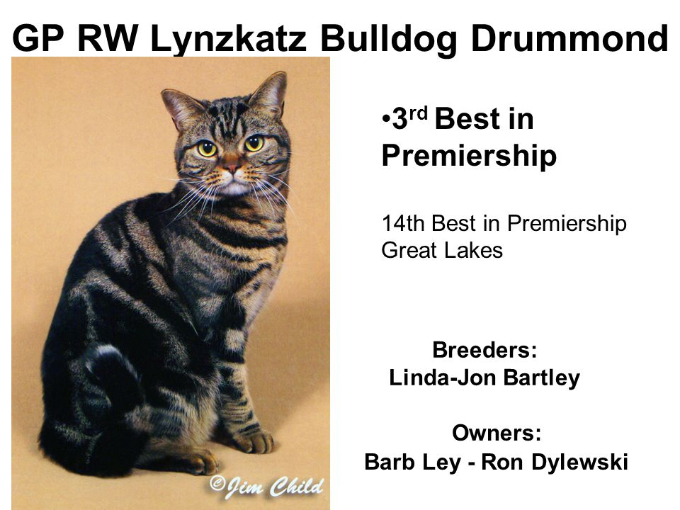 GP RW Lynzkatz Bulldog Drummond Breeders: Linda-Jon Bartley Owners: Barb Ley - Ron Dylewski 3 rd Best in Premiership 14th Best in Premiership Great Lakes