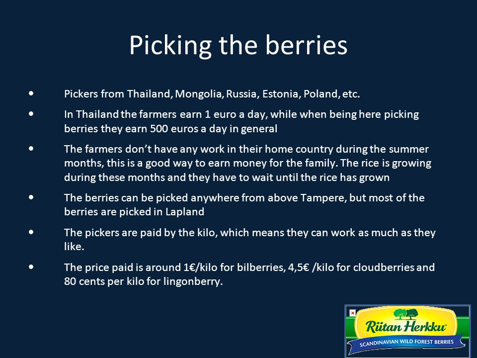 Berrypicking Championship  Berrypicking championship are held in the summer  Pickers try to pick as much lingonberry as possible in one hour.