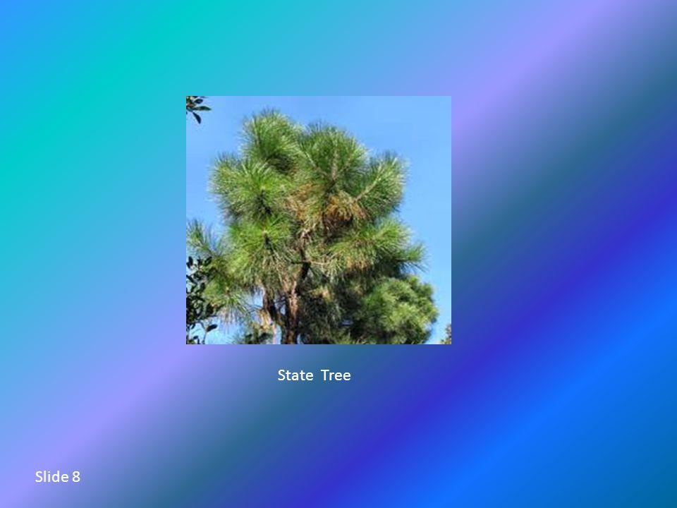 State Tree Slide 8