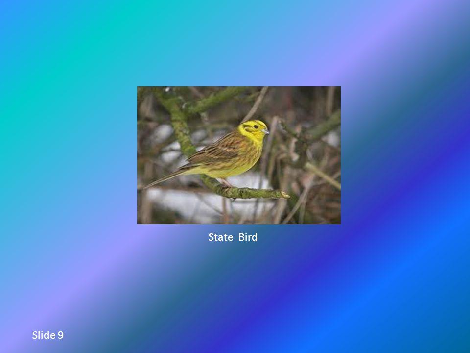 State Bird Slide 9