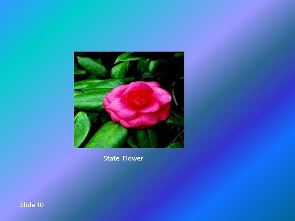 State Flower Slide 10