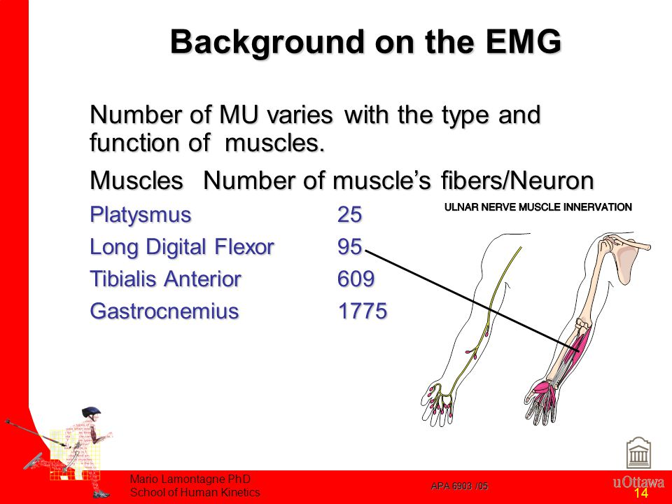 APA 6903 /05 Mario Lamontagne PhD School of Human Kinetics 14 Background on the EMG Number of MU varies with the type and function of muscles.