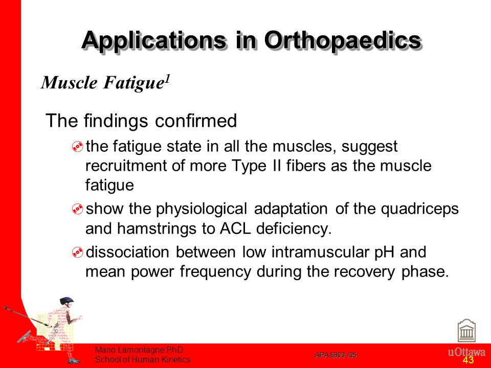 APA 6903 /05 Mario Lamontagne PhD School of Human Kinetics 43 Applications in Orthopaedics The findings confirmed  the fatigue state in all the muscles, suggest recruitment of more Type II fibers as the muscle fatigue  show the physiological adaptation of the quadriceps and hamstrings to ACL deficiency.