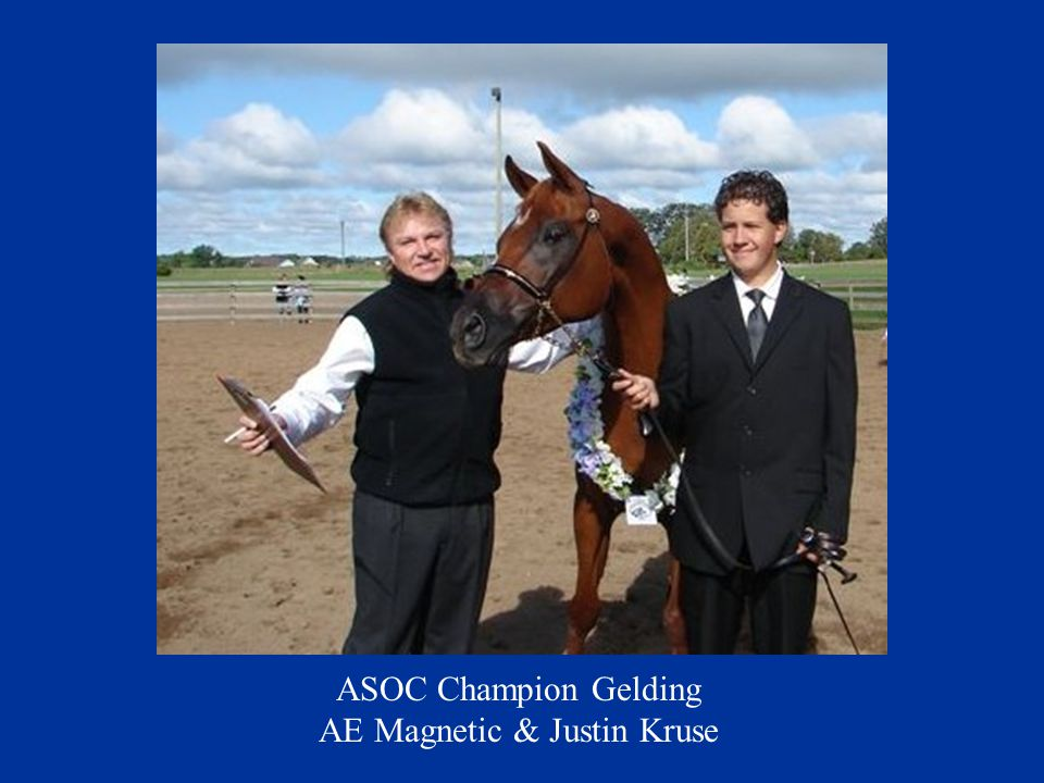 ASOC Champion Gelding AE Magnetic & Justin Kruse