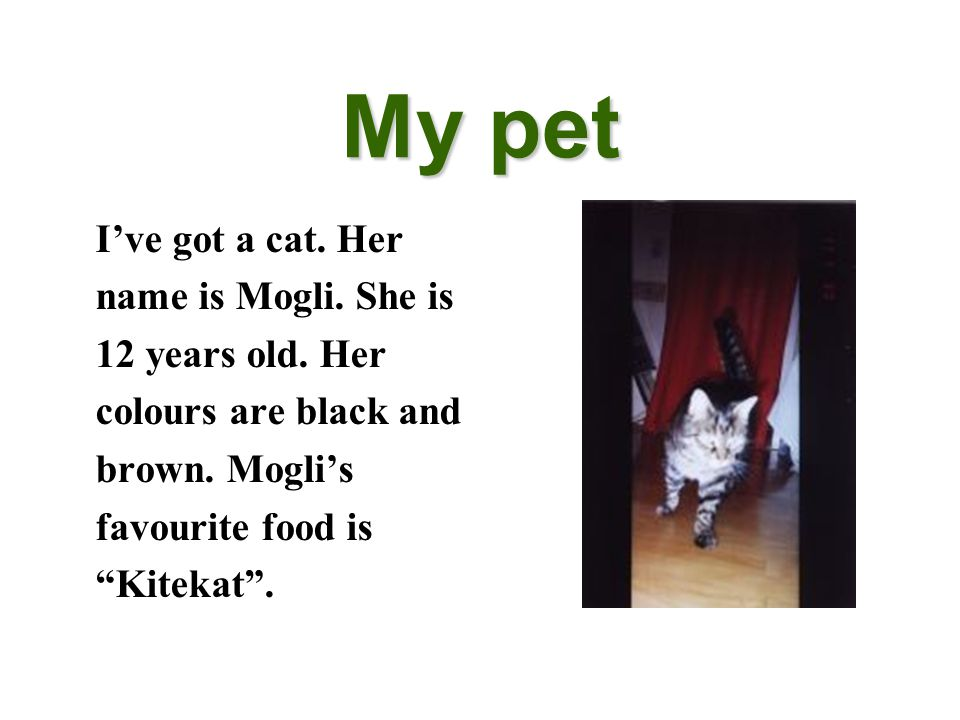 """My pet I've got a cat. Her name is Mogli. She is 12 years old. Her colours are black and brown. Mogli's favourite food is """"Kitekat""""."""