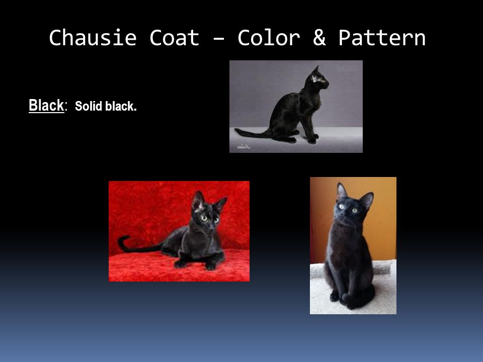Chausie Coat – Color & Pattern Black : Solid black.