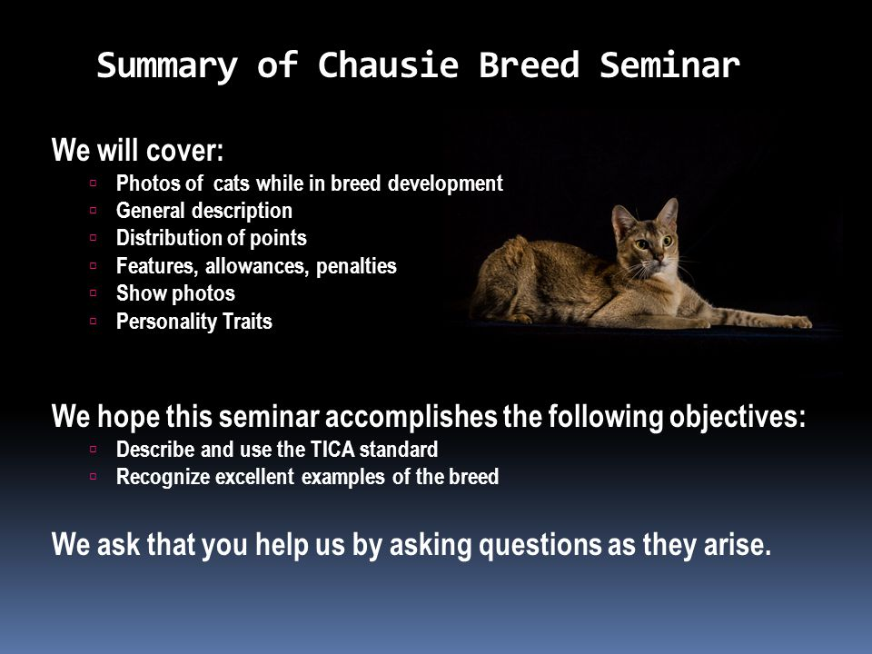 Summary of Chausie Breed Seminar We will cover:  Photos of cats while in breed development  General description  Distribution of points  Features, allowances, penalties  Show photos  Personality Traits We hope this seminar accomplishes the following objectives:  Describe and use the TICA standard  Recognize excellent examples of the breed We ask that you help us by asking questions as they arise.