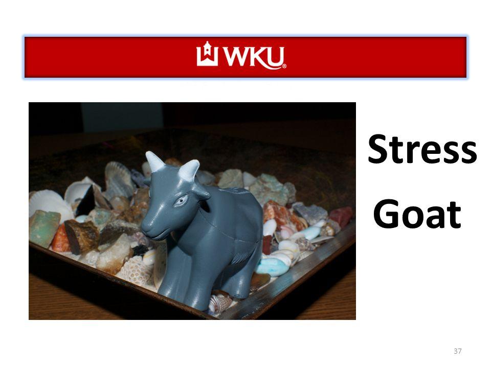 37 Stress Goat