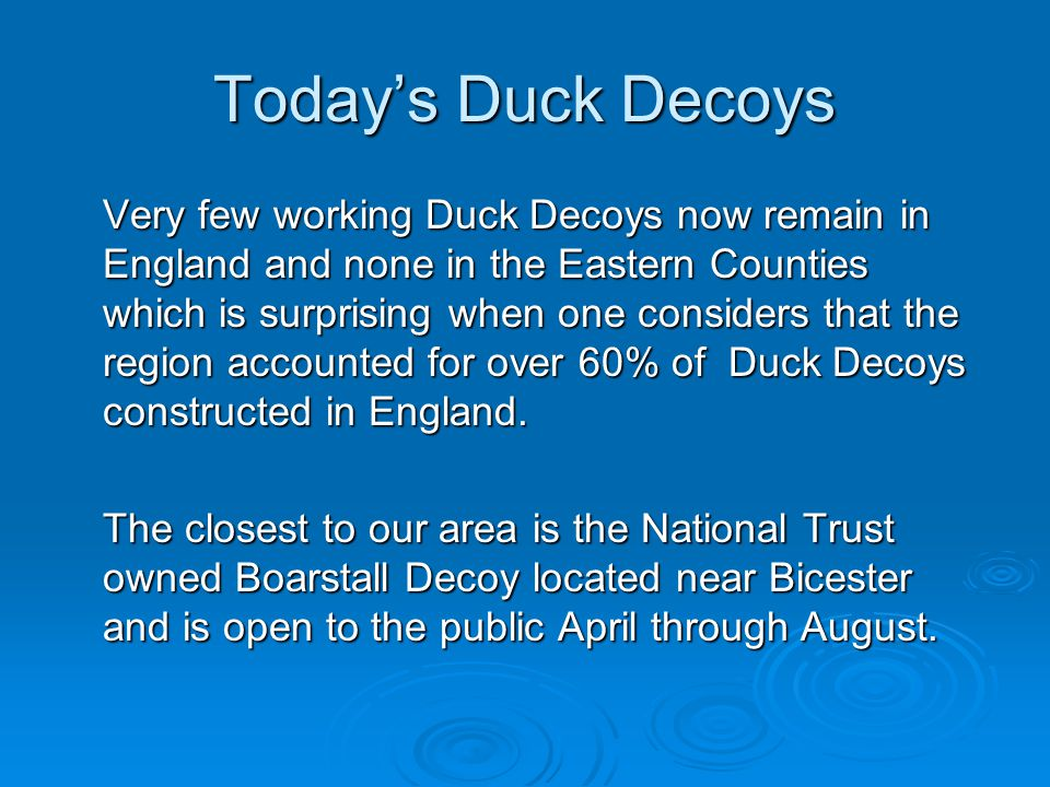 Today's Duck Decoys Very few working Duck Decoys now remain in England and none in the Eastern Counties which is surprising when one considers that the region accounted for over 60% of Duck Decoys constructed in England.