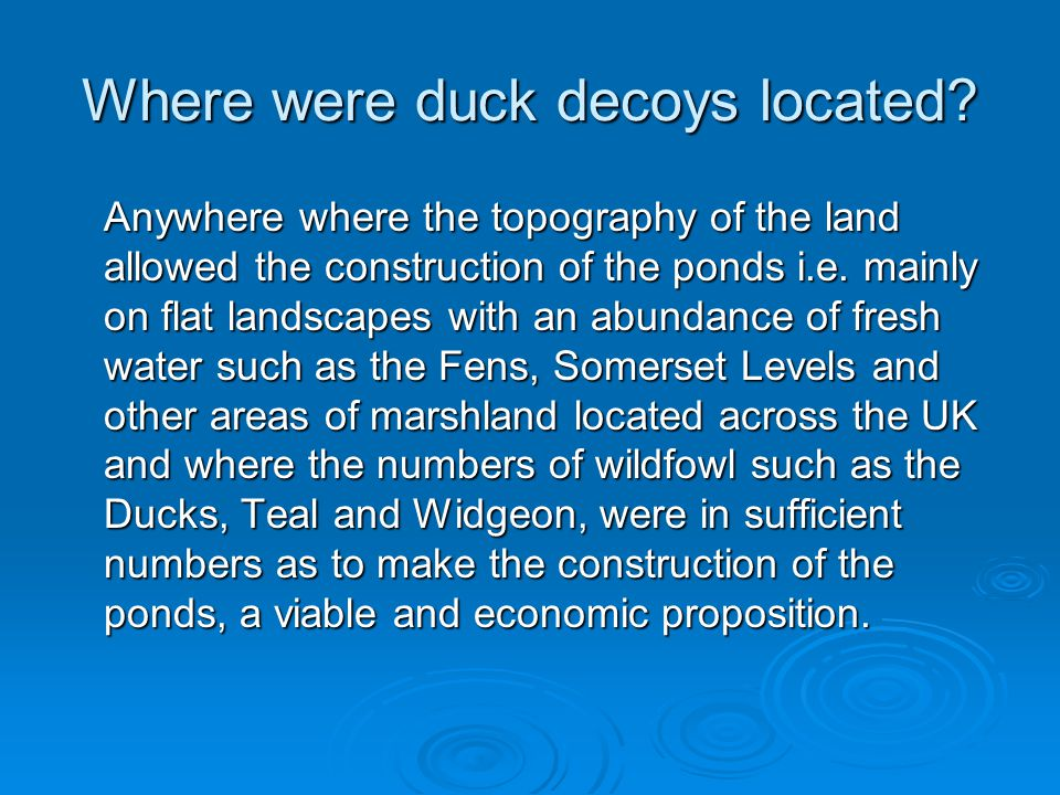 Where were duck decoys located.