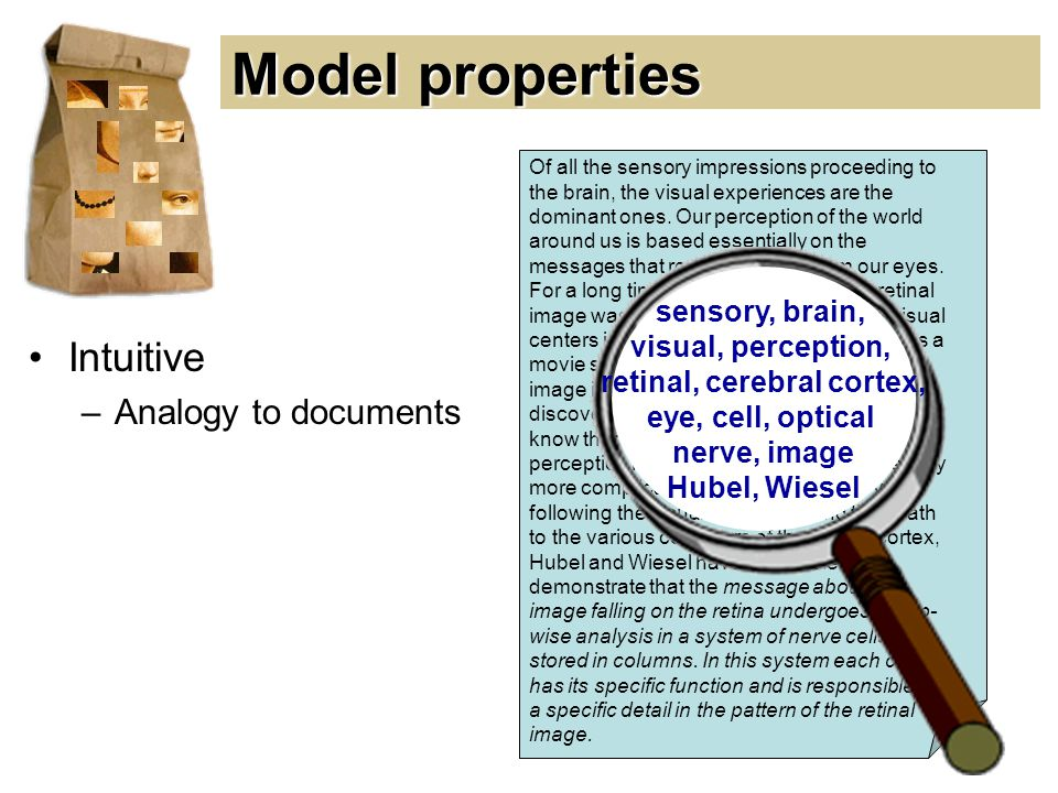 Model properties Of all the sensory impressions proceeding to the brain, the visual experiences are the dominant ones.