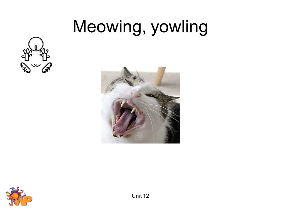 Unit 12 Meowing, yowling