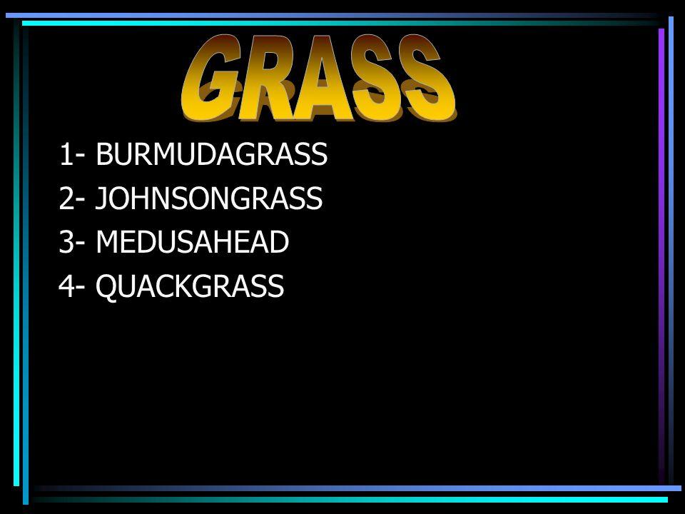 1- BURMUDAGRASS 2- JOHNSONGRASS 3- MEDUSAHEAD 4- QUACKGRASS