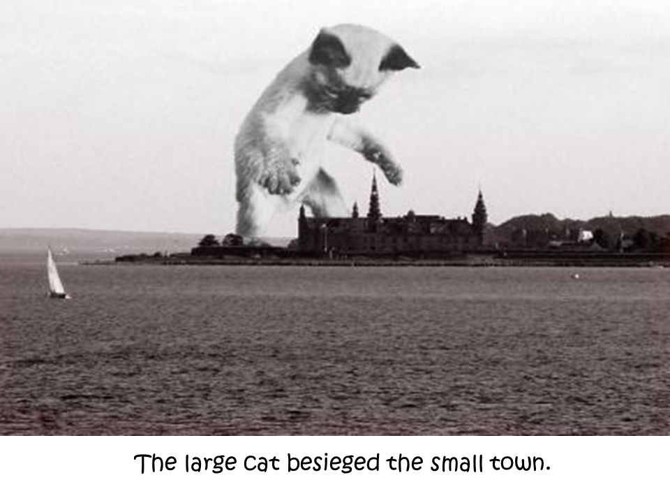 The large cat besieged the small town.