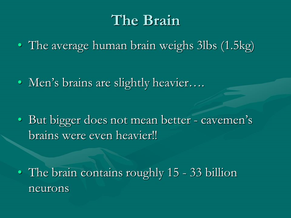 The Brain The average human brain weighs 3lbs (1.5kg)The average human brain weighs 3lbs (1.5kg) Men's brains are slightly heavier….Men's brains are slightly heavier….