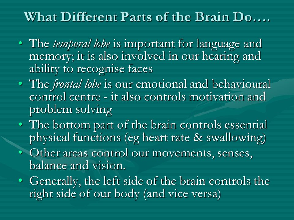 What Different Parts of the Brain Do….