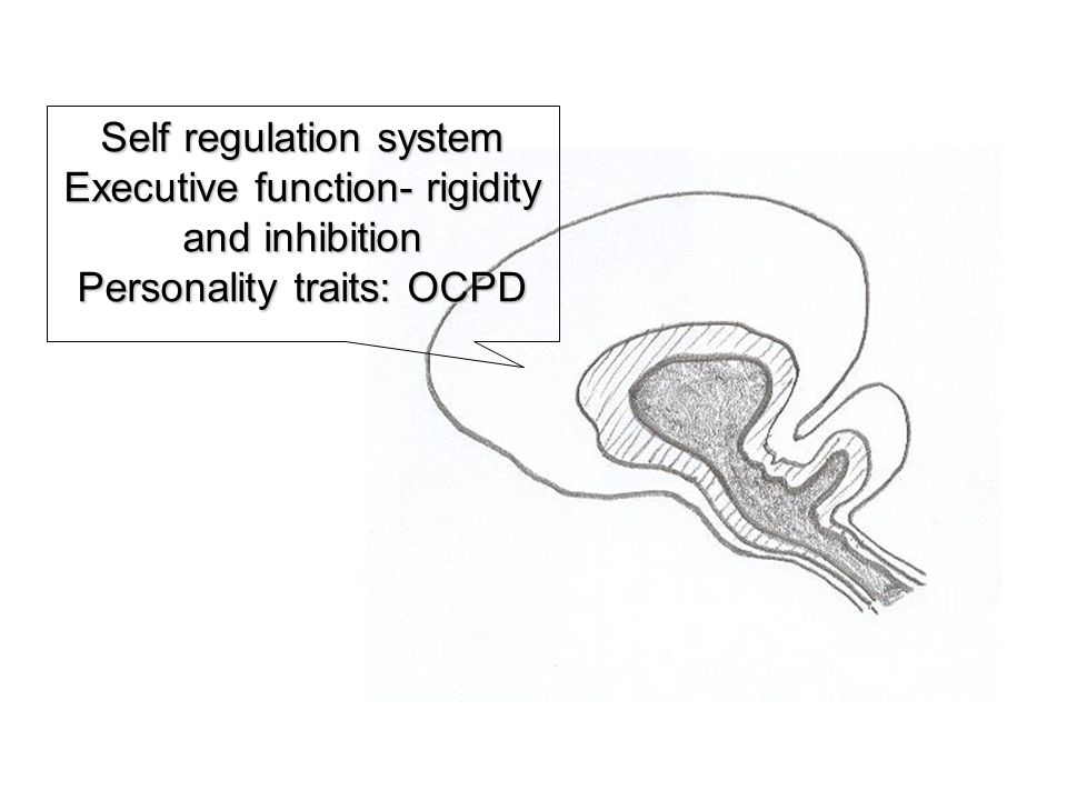 Self regulation system Executive function- rigidity and inhibition Personality traits: OCPD