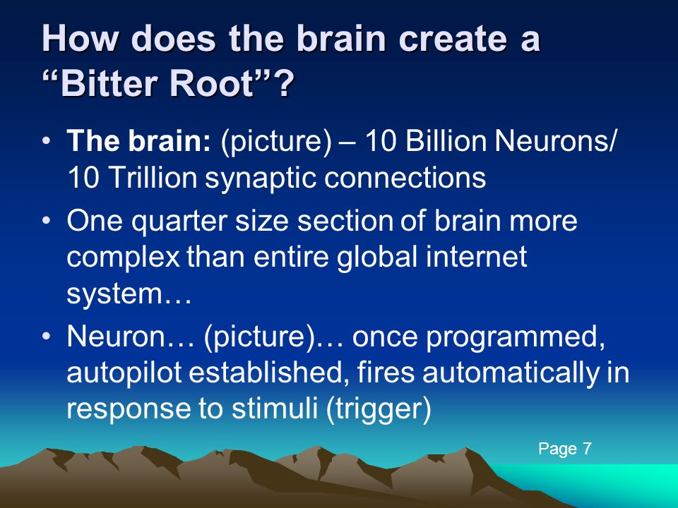 How does the brain create a Bitter Root .