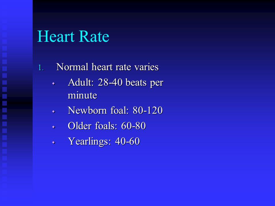 Heart Rate 1. Normal heart rate varies  Adult: 28-40 beats per minute  Newborn foal: 80-120  Older foals: 60-80  Yearlings: 40-60