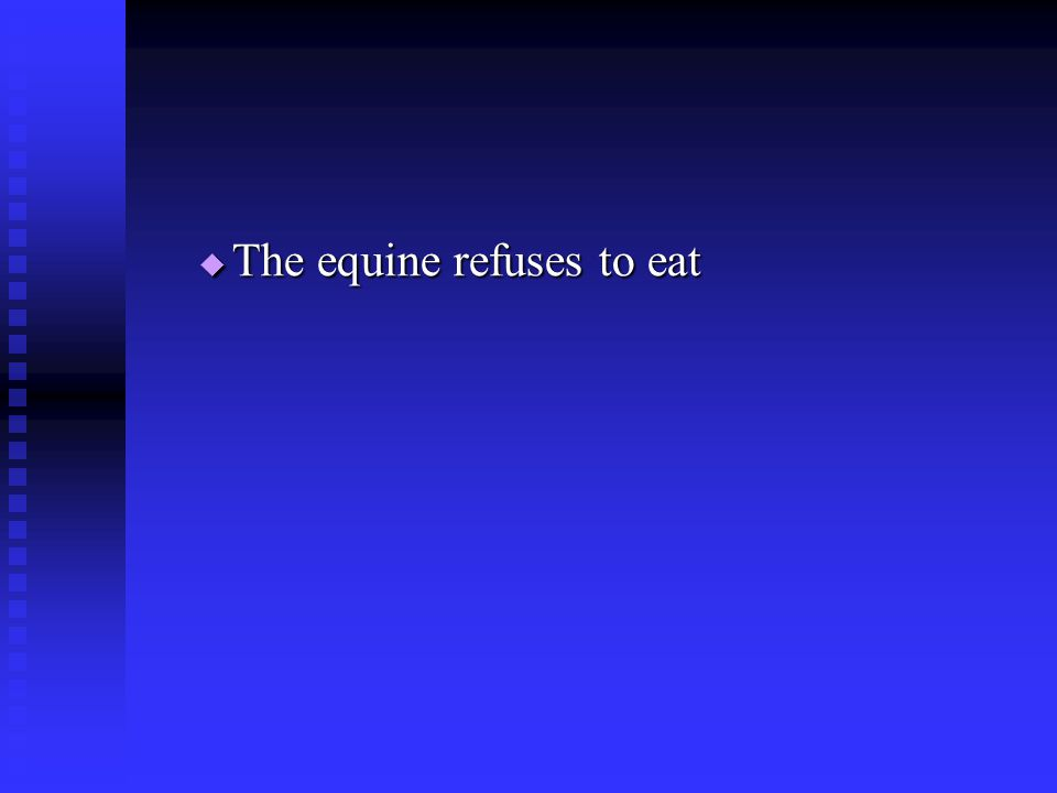  The equine refuses to eat