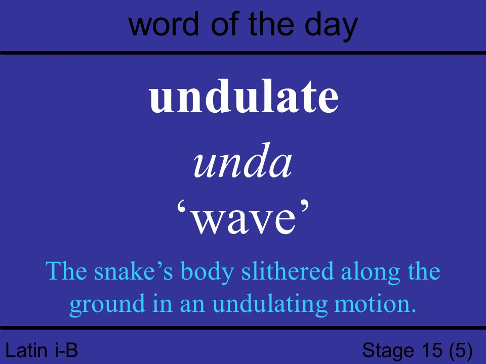 Latin i-B Stage 15 (5) word of the day undulate unda 'wave' The snake's body slithered along the ground in an undulating motion.