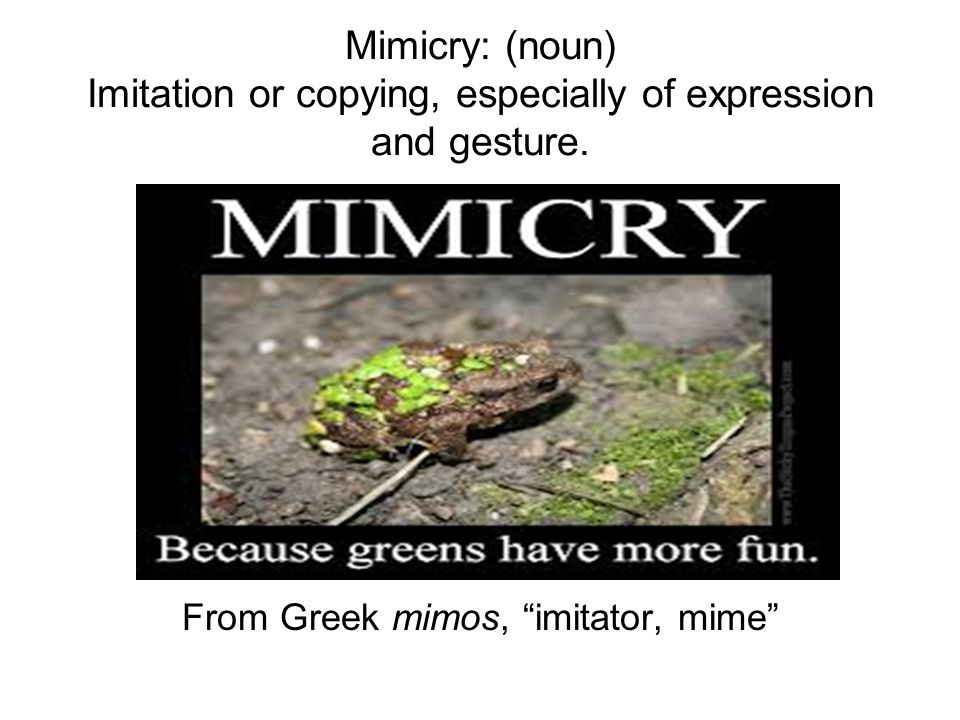 "Mimicry: (noun) Imitation or copying, especially of expression and gesture. From Greek mimos, ""imitator, mime"""