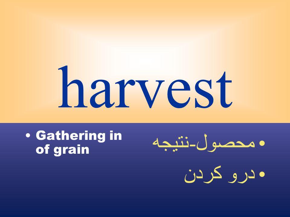harvest Gathering in of grain محصول - نتيجه درو كردن